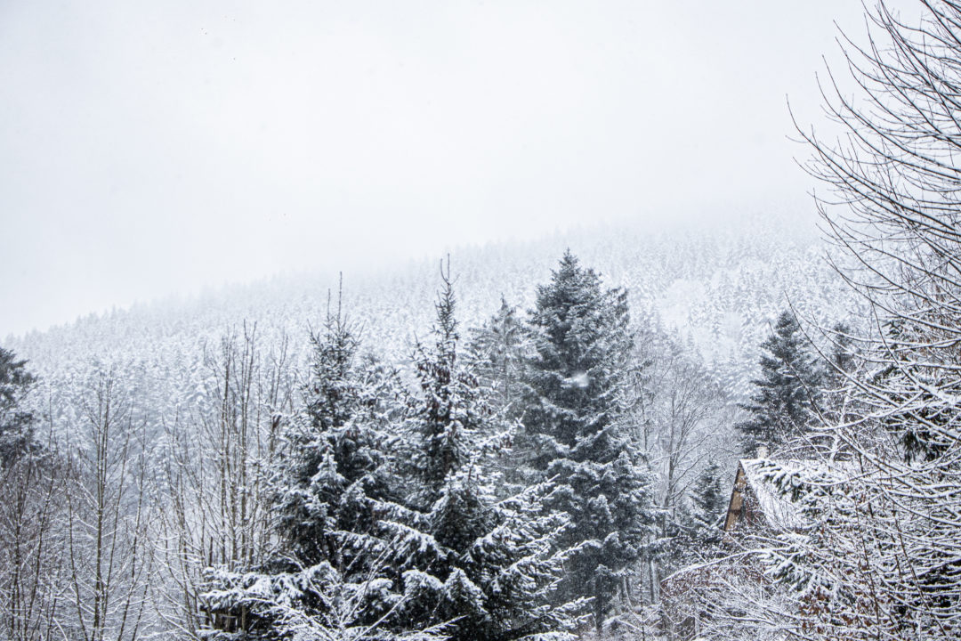 Vosges-site-12